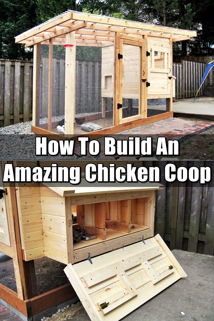Great chicken coop designs hacks. Have plastic bags readily