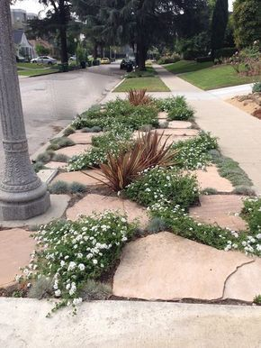 examples of how homeowners are replacing grass parkways with more drought tolerant landscaping and trying to - Garden Ideas To Replace Grass