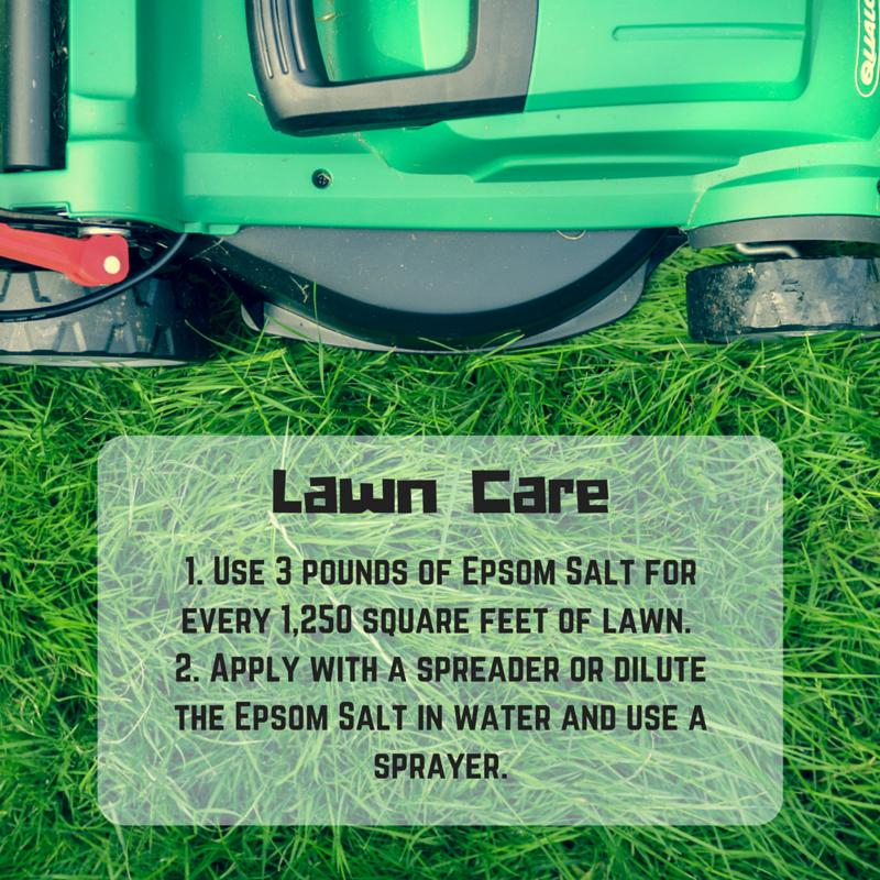The Gr Is Always Greener On Side That Uses Epsom Salt Lawn Gardening Epsomsalt Greenthumb