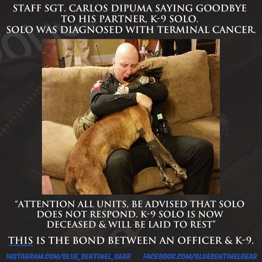 RT @LEORollCall: K-9's are more than just a dog with a badge to their handlers & their Agencies. They're family. #Police #K9 #Cops https://t.co/jOzAxsujbI