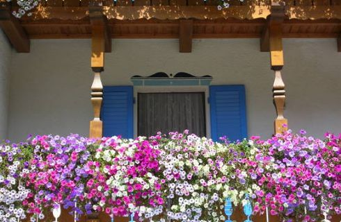 Piante da balcone resistenti al sole  Balcony blossom ...