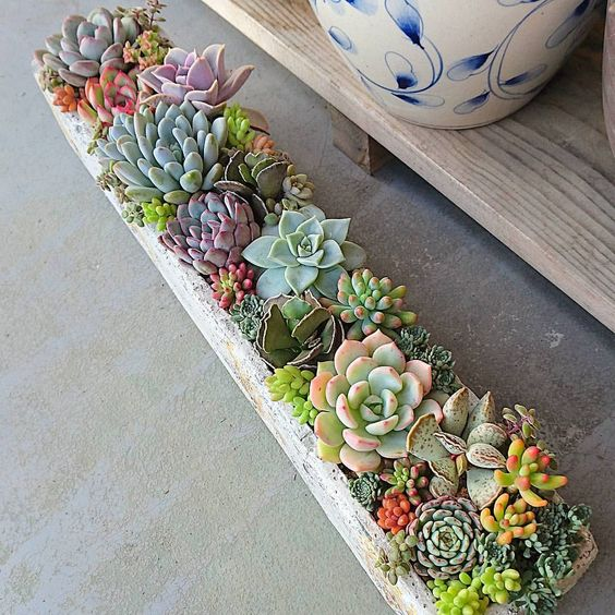 Photo of 52 CUTE SUCCULENTS CULTIVATE LANDSCAPE; Succulents;Home Decoration;Succulent Pot…