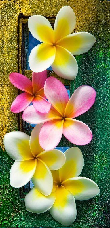 Rose Retreat Most Beautiful Flowers Hawaii Flowers Beautiful Flowers