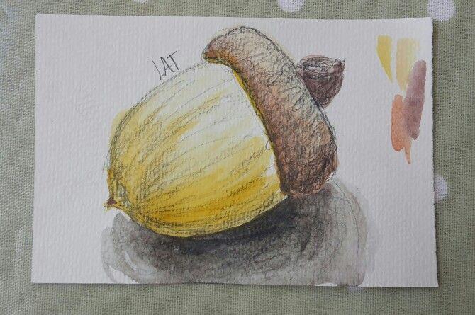 An acorn!