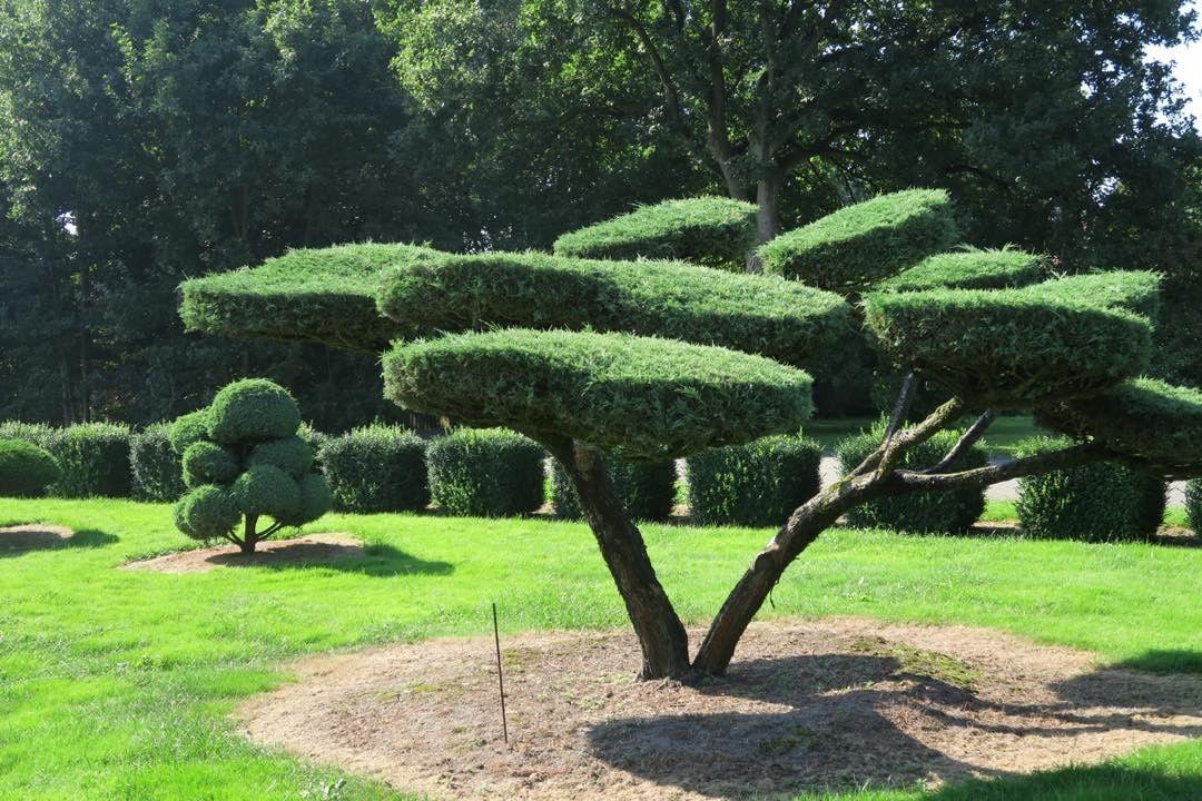 gartenbonsaigartengestaltungbonsaibonsaigarten With garten planen mit bonsai azalee