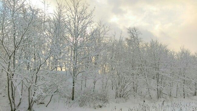 Sapporo 2015冬✨