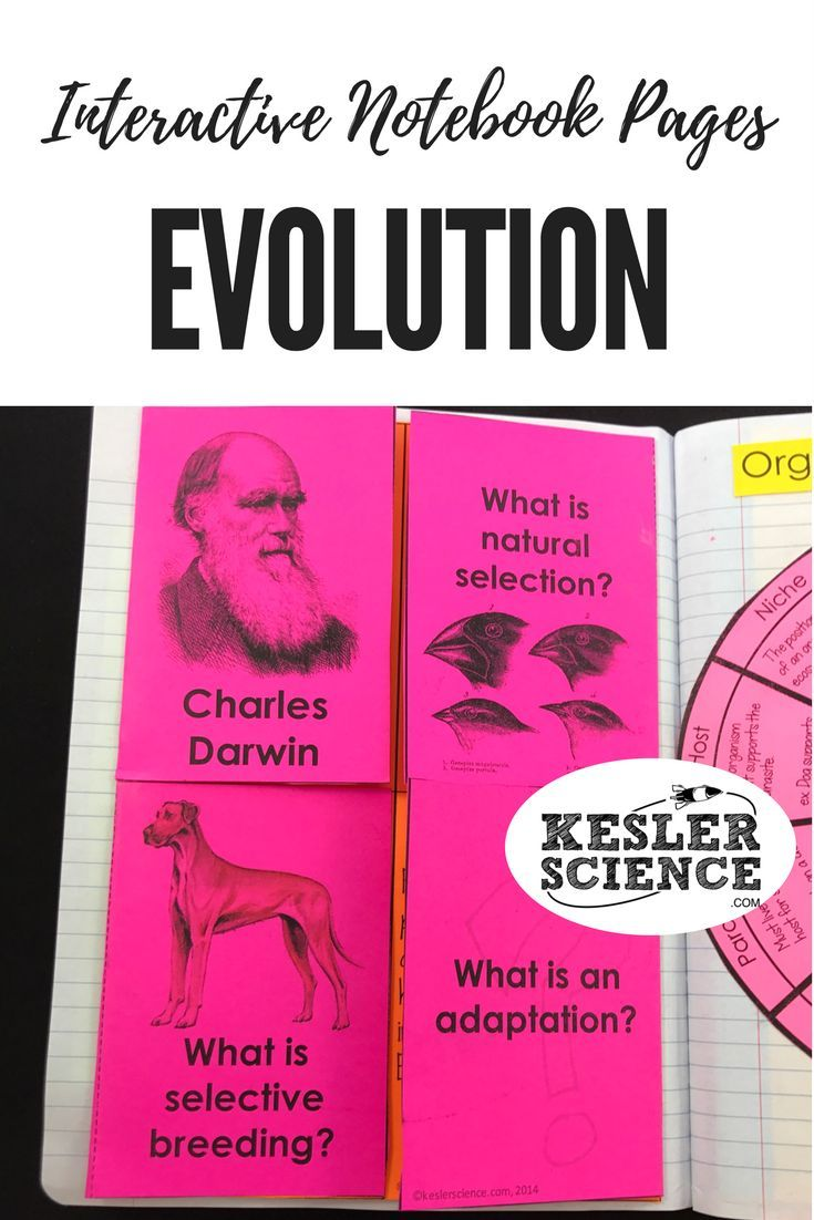 Evolution Foldable Worksheet Includes Questions Regarding Natural Selection Selective Br Selective Breeding Interactive Notebooks Interactive Science Notebook [ 1102 x 735 Pixel ]