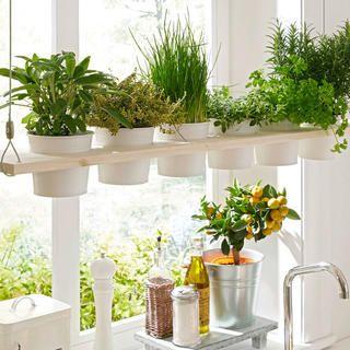 Kräuterregal selber bauen #kleinekräutergärten