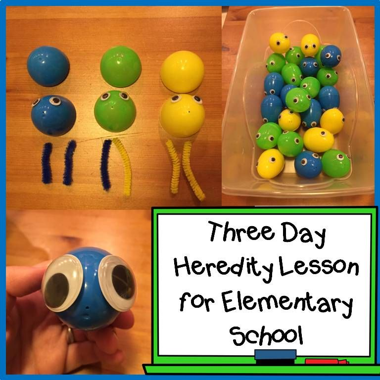 Heredity Lessons For Elementary School Hands On And Fun