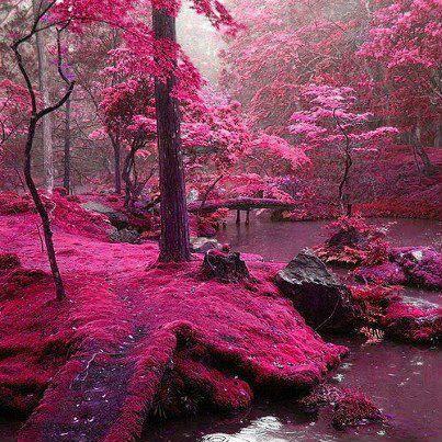 Pink forest in Ireland.