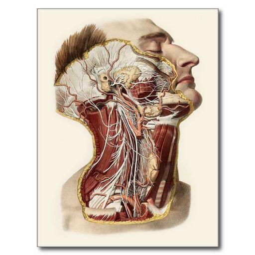 Postal Diseño de la anatomía de la cabeza humana | Anatomía de la ...