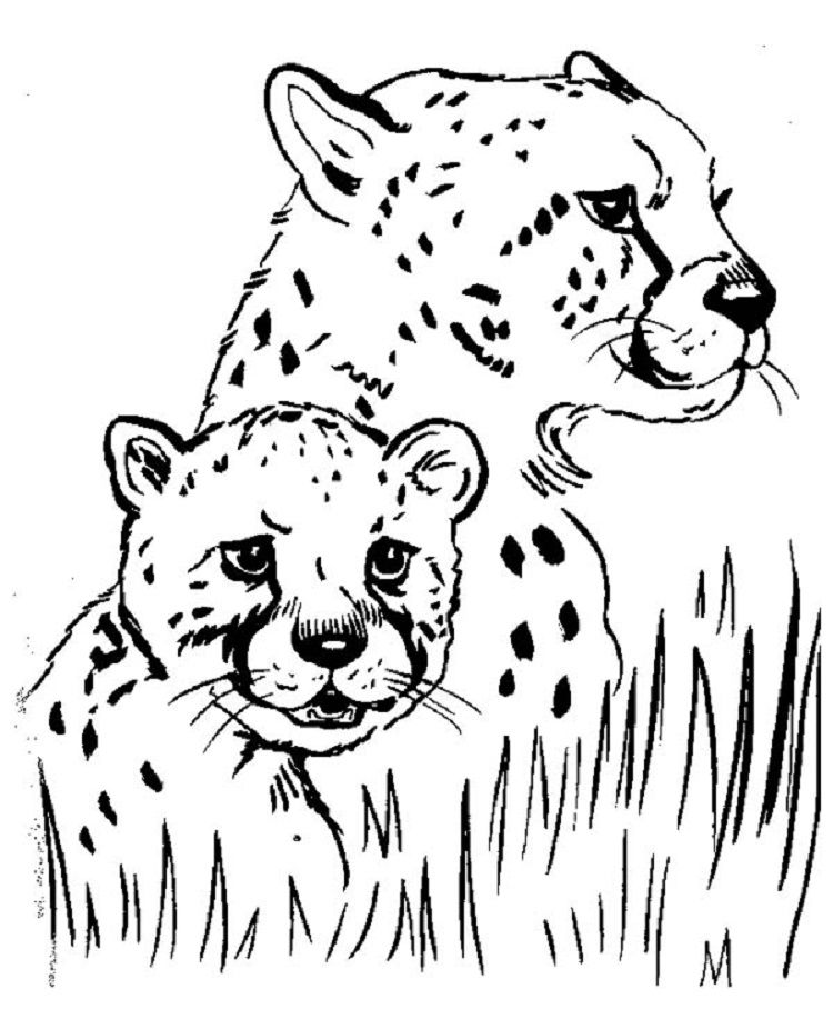 Cheetah Cub Coloring Pages Check More At Http://coloringareas.com/6306