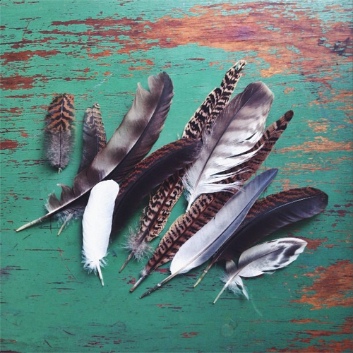 Yes I do collect feathers