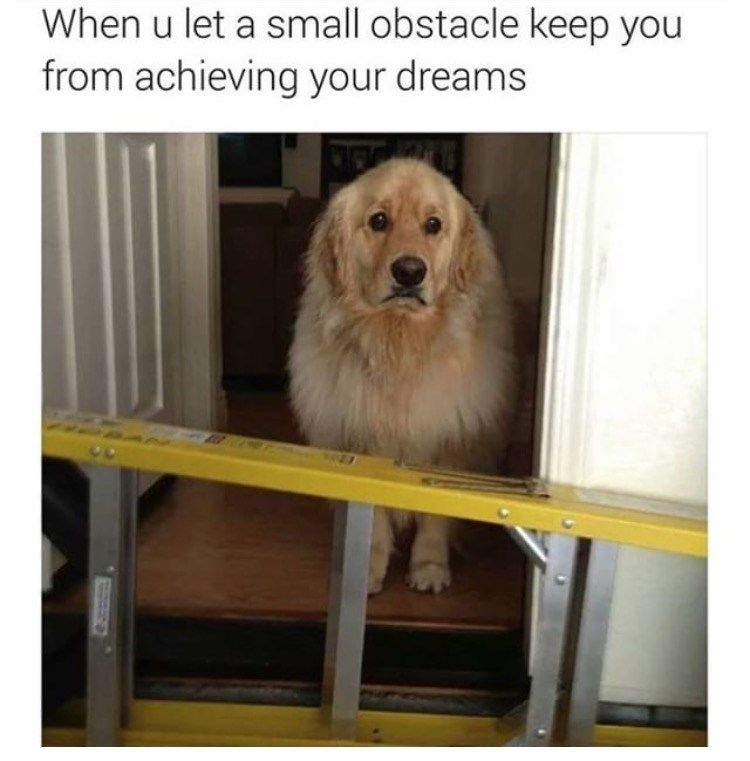 34 Stupid And Funny Memes To Satisfy Your Craving For Humor Funny Dog Memes Funny Animal Memes Funny Animals