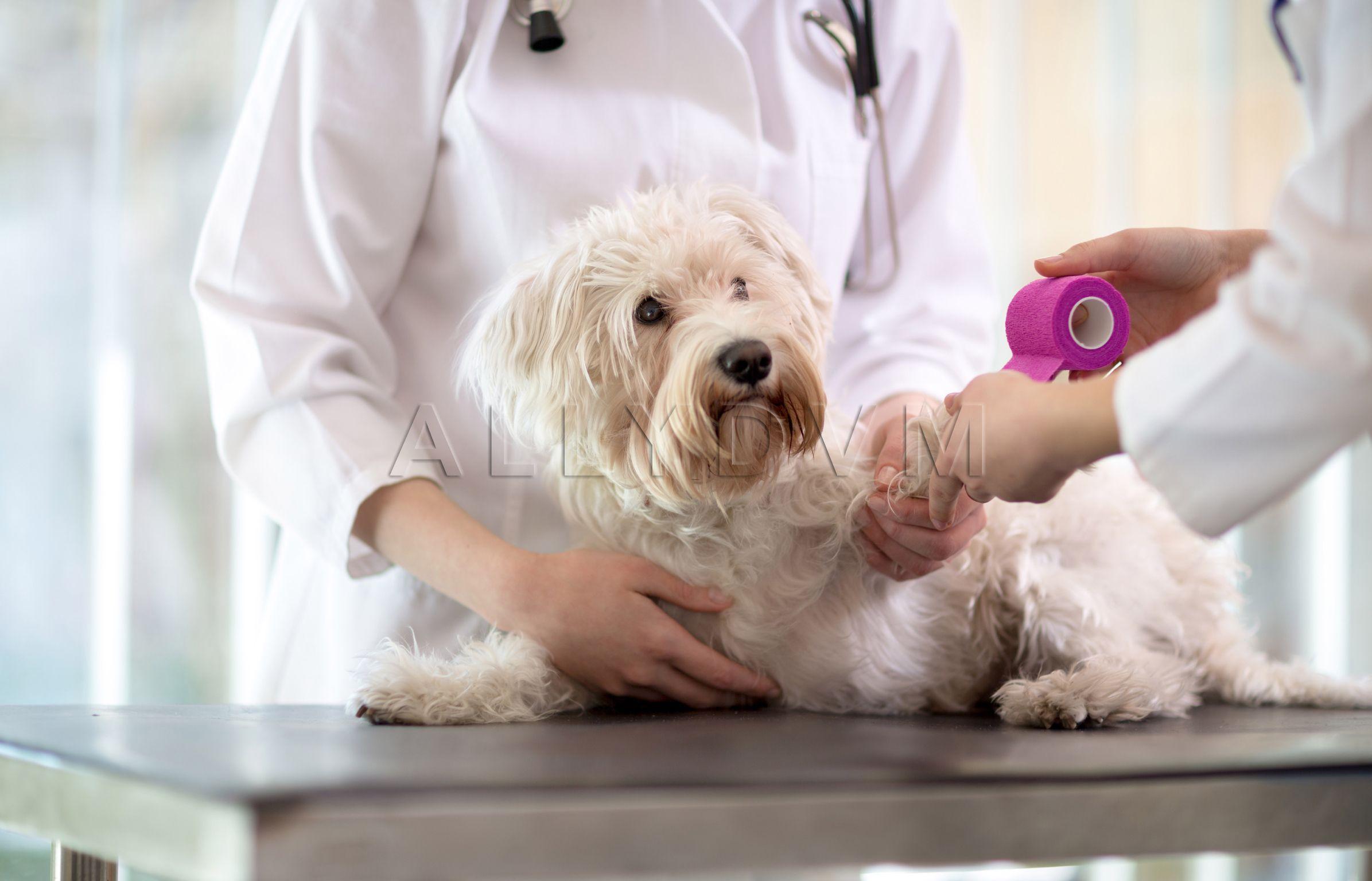 Pin By Allydvm On Veterinary Puppy Insurance Emergency Vet Dog