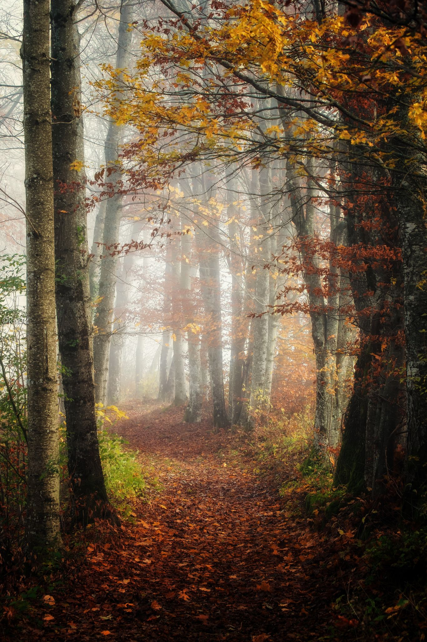 Welcome Fall Wallpaper The Enchanted Forest Autumn Woods Switzerland By