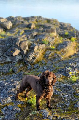 Duck Hunting Supplies And Retriever Training Gear Boykin Spaniel
