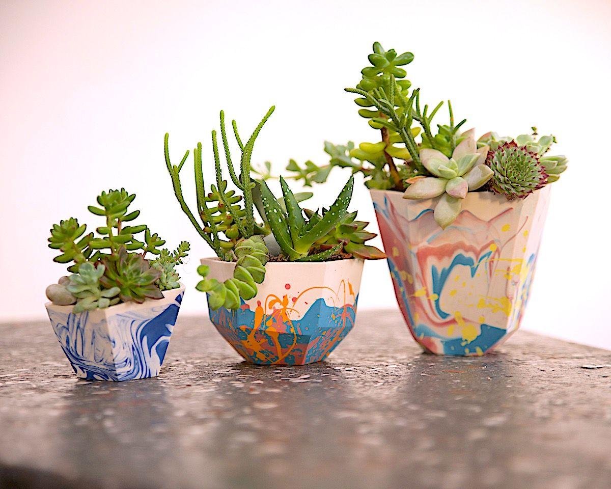 Sophie Jarram Succulent Pot Succulent pots, Succulents