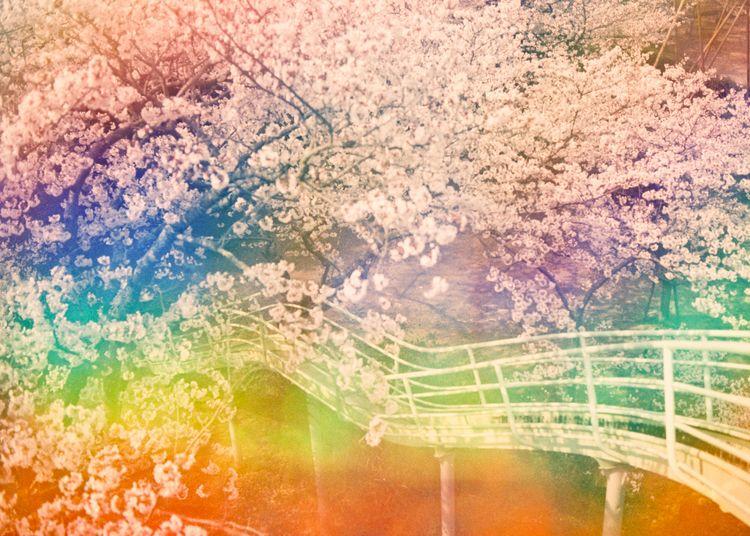 Sakuramadelica | Takeshi Suga.
