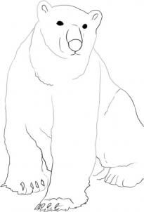 how to draw a arctic wolf step by step