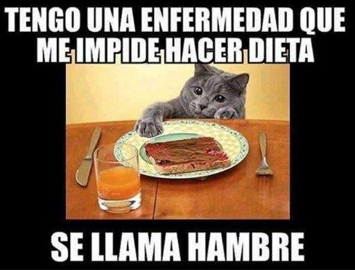 Resultado De Imagen Para Algo Gracioso Sobre Dieta Puppies Funny Cat Day Memes