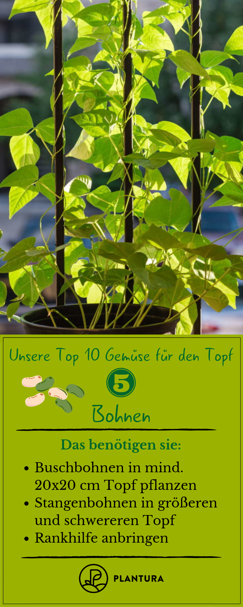 Growing vegetables in a pot the 10 best varieties for pot culture  Plantura  Our top 10 vegetables for the pot beans The variety of beans is huge and almost all of them c...