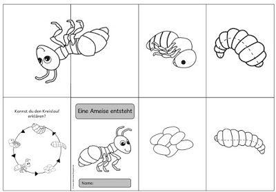 ideenreise faltheft ameisen insekten pinterest. Black Bedroom Furniture Sets. Home Design Ideas