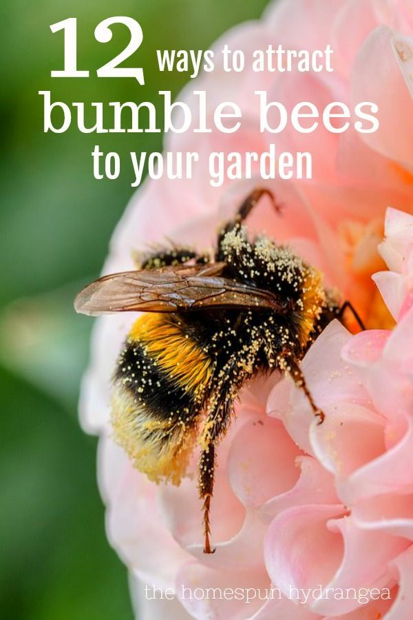 12 Ways to Attract Bumble Bees to Your Garden is part of Bee garden, Bumble bee, Attracting bees, Bee, Pollinator garden, Plants to attract bees - Bees are vital to our planet and environment, so take a look at these 12 ways to attract bumble bees to your yard and garden!