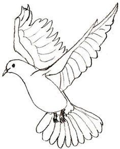 How to Draw a Dove - Draw Step by Step | b | Pinterest | How to ...