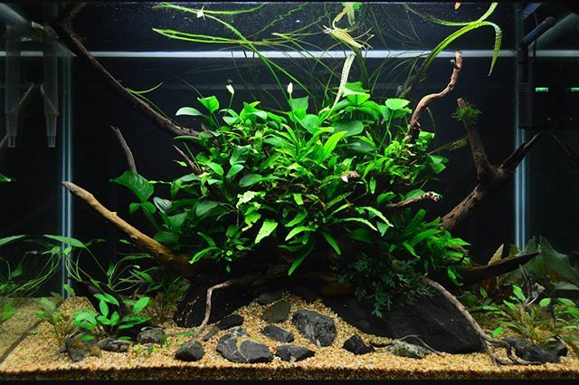 Captivating Nature Aquarium #natureaquarium #naturalovers #aquascaping #aquascapeu2026