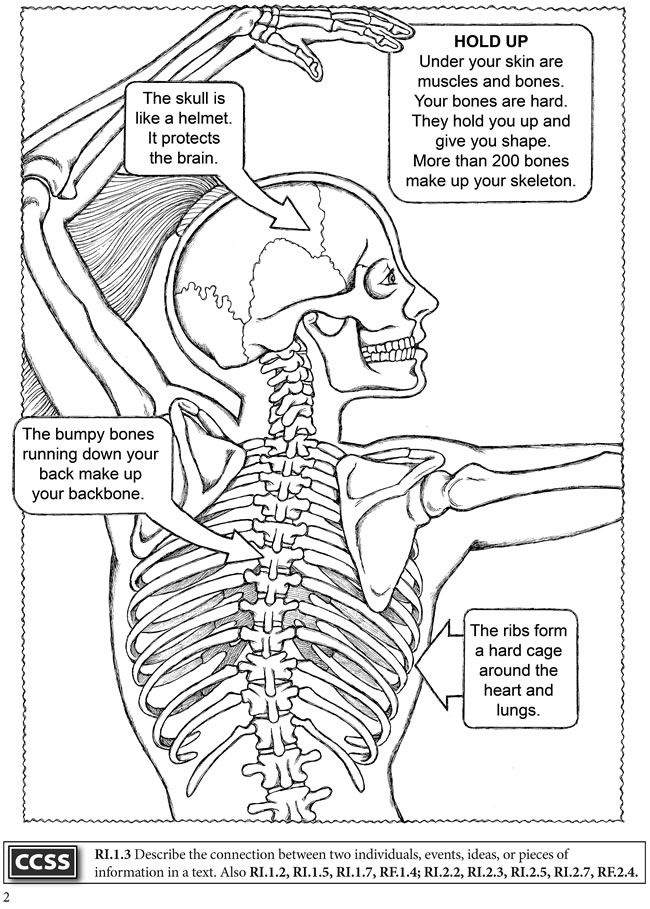 Welcome To Dover Publications Human Body Science Anatomy Coloring Book Human Body Unit Study