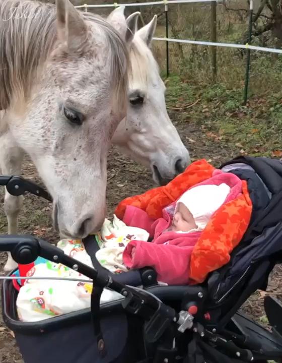 Geschichte 1 Jahr bis 18 Jahre: sie baute ein Vertrauensverhältnis zwischen sich u den Pferden auf. Emotional.