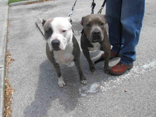 Http Www Brevardcounty Us Animalservices Adoptablepets Southcenter Animals Needing Adoption