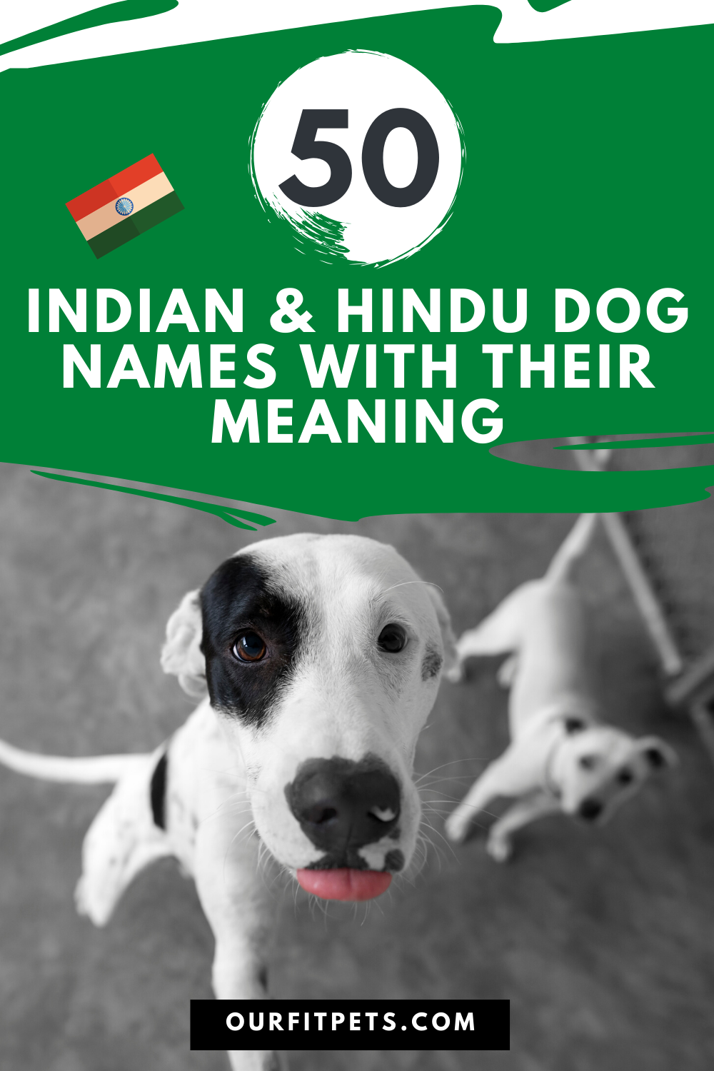 Indian Dog Names With Picture