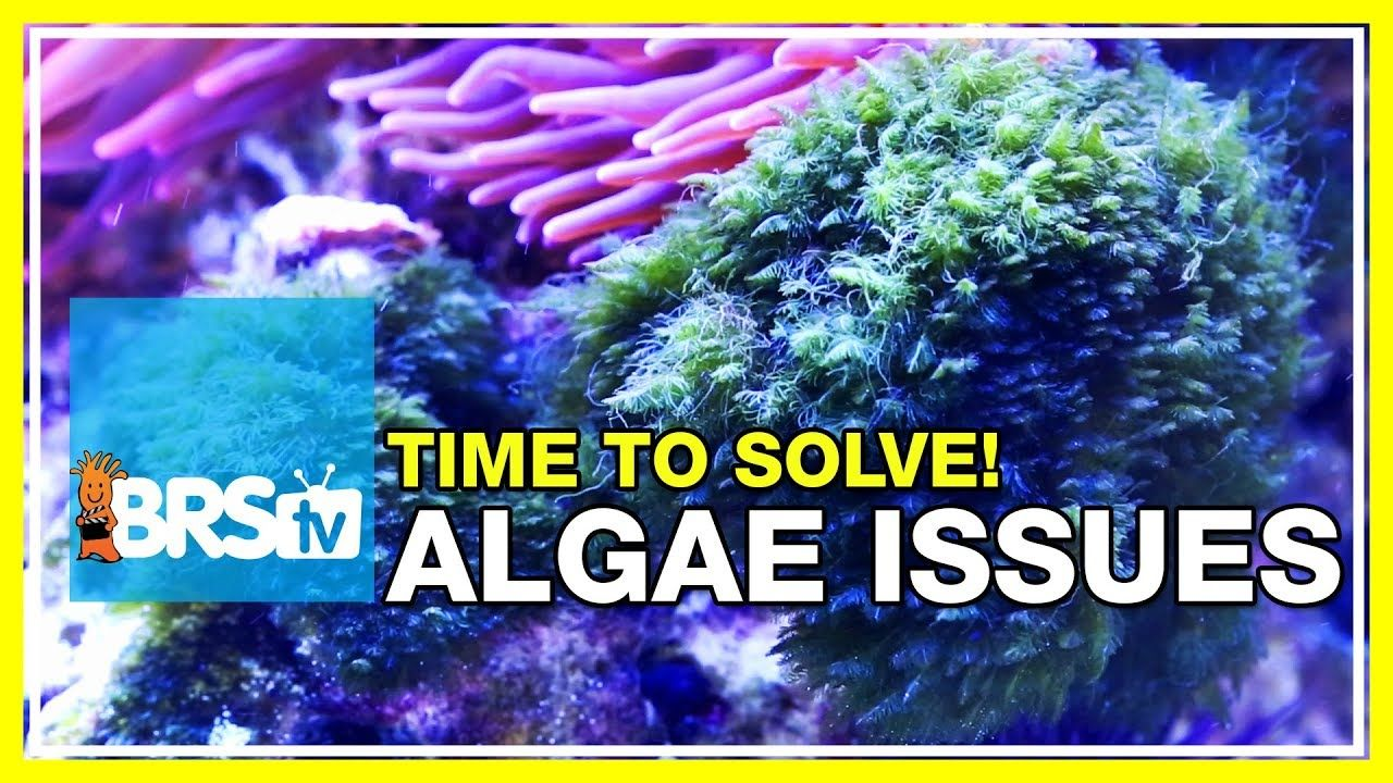 Week 48 Keep Algae Out Of Your Reef Tank Forever 52 Weeks Of Reefing In 2020 Reef Tank Algae Reef