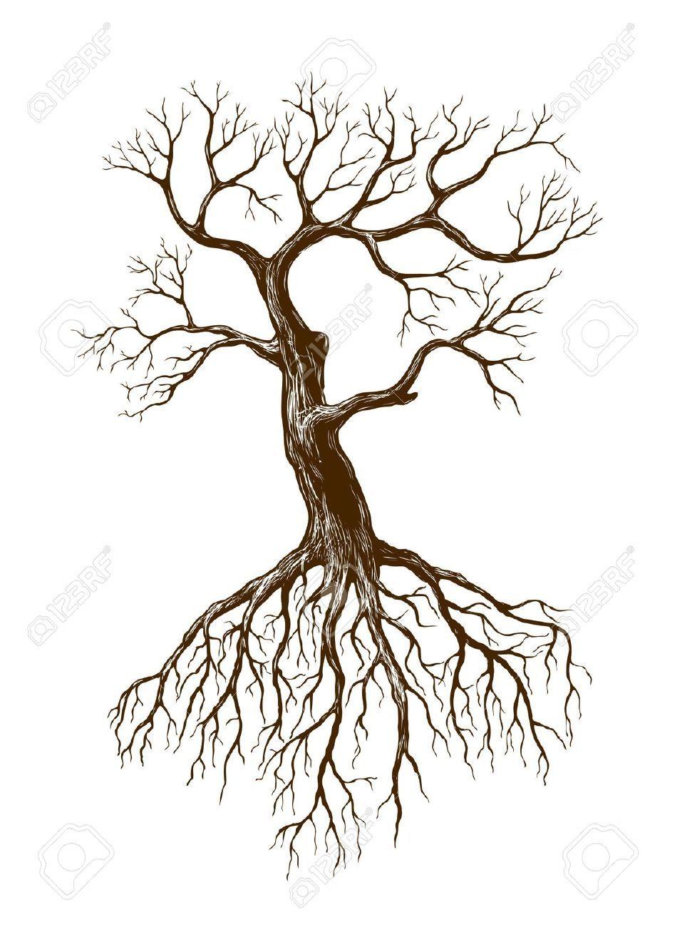Illustration de gros arbre sans feuilles 35 botanica - Dessin arbre sans feuille ...