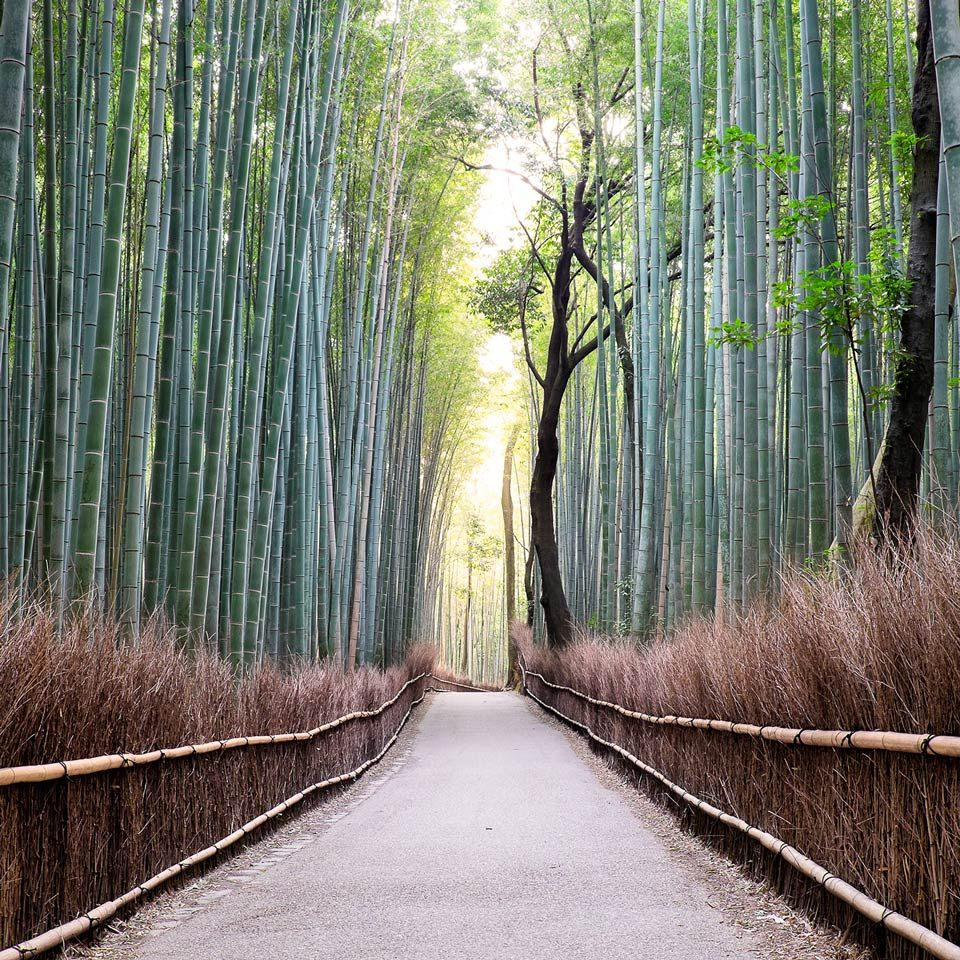 Instagram-Arashiyama-Bambo-Forest-Kyoto-Japan | Forest, Photo tour ...
