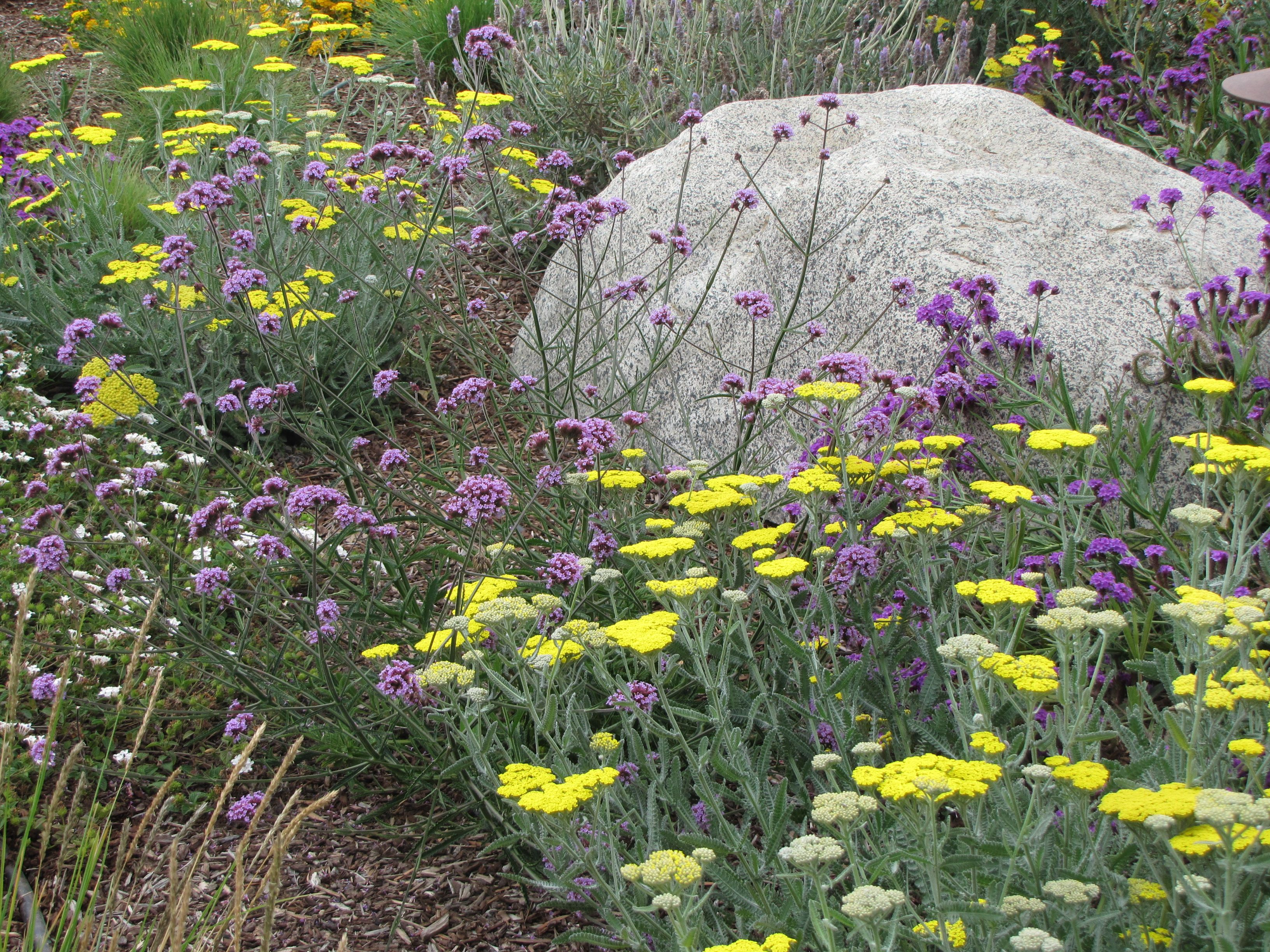 How Do I Get A Product Made Verbena And Yarrow Surround This Landscape Boulder And Its A