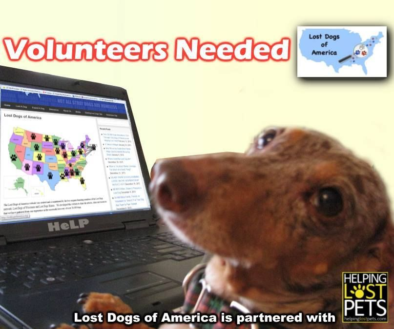 Lost Dogs of California is in need of volunteers! We are a