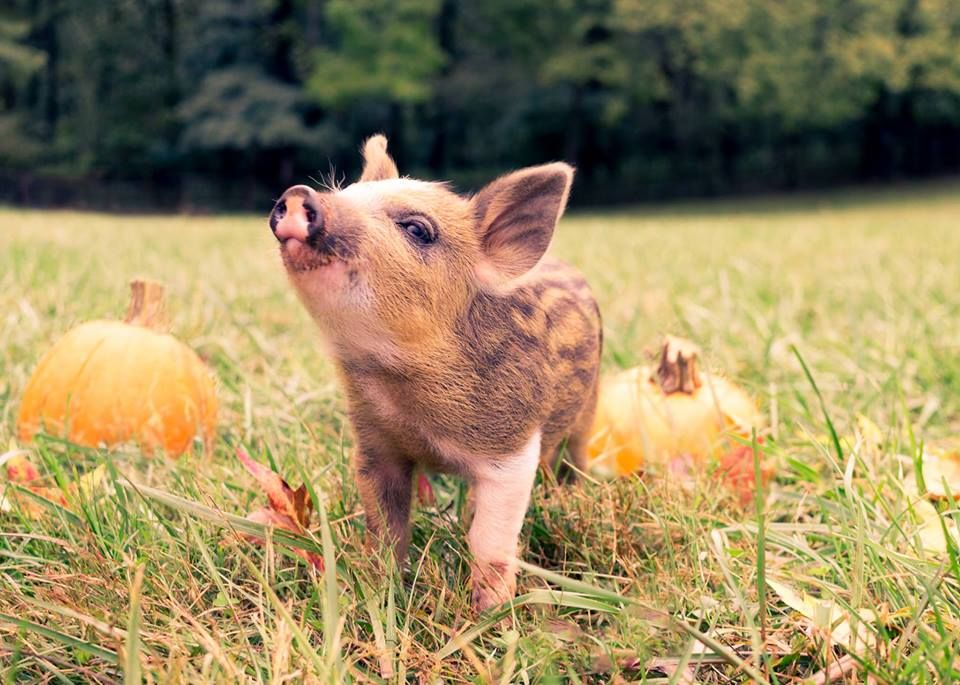 Poplar Spring Animal Sanctuary is a 400 acre nonprofit