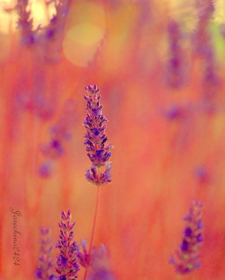 I enjoy pretty things and pretty photography.