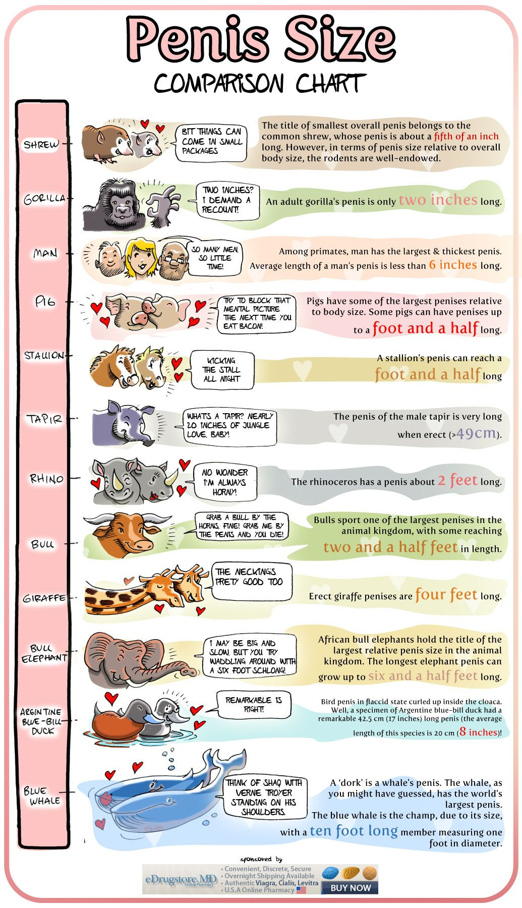 Penis-size-does-matter-infographic.jpg (2280×1782) | Sexxxy | Pinterest