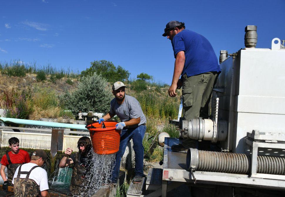 30,000 channel catfish stocked across Idaho's lakes and
