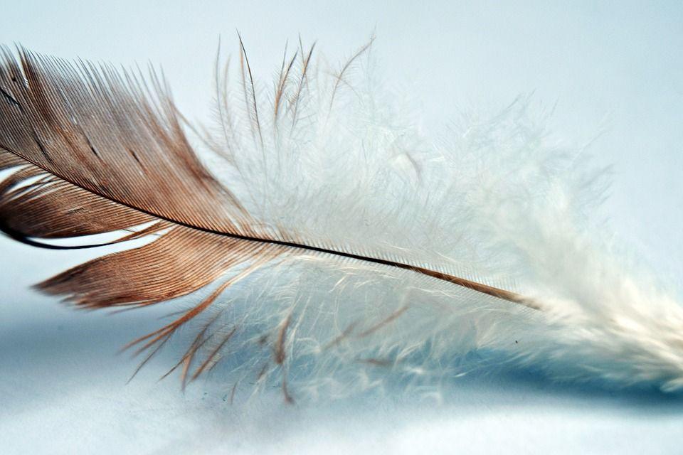 J'ai osé... écrire un livre a quatre mains - La Gestalt comme philosophie de vie - www.sijosais.com