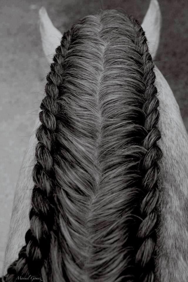 Horse Hair Styles Horse Braiding Horse Grooming Horse Mane Braids