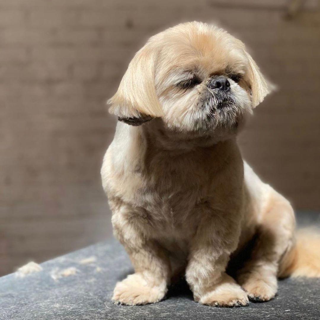 Dog Idea Dog Homes Dogs And Babies Dog Cat Dog Ate Dog Home Ideas Home Dog Dogs And Puppys Puppy Cute Dog Cute Dog S Dogs In 2020 Dogs And Puppies