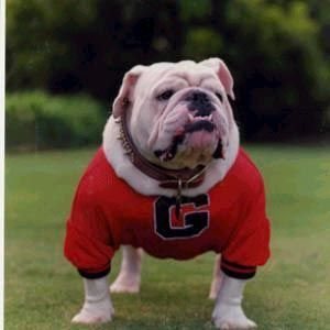 Uga Vi Uga V S Whatchagot Loran Served As Georgia Bulldogs