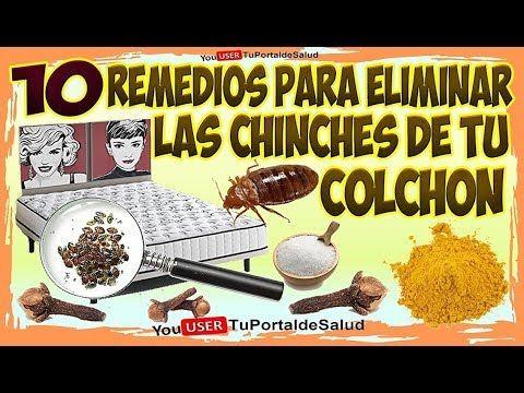 Como Acabar Con Las Chinches En Casa 10 Remedios Para Eliminar Las Chinches Del Colchon Como Eliminar