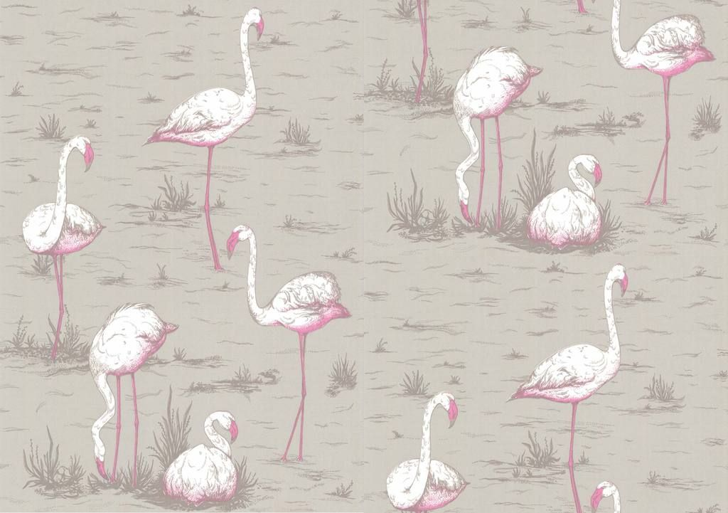 Flamingos In 2019 Also Obsessed With Wallpaper Flamingo