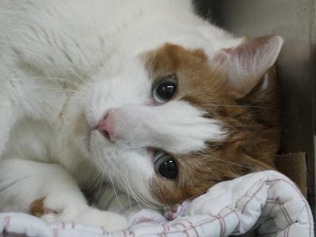 Photos Adopt These Nyc Animals Kitten Adoption American